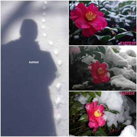 雪見山茶花コラージュ.jpg